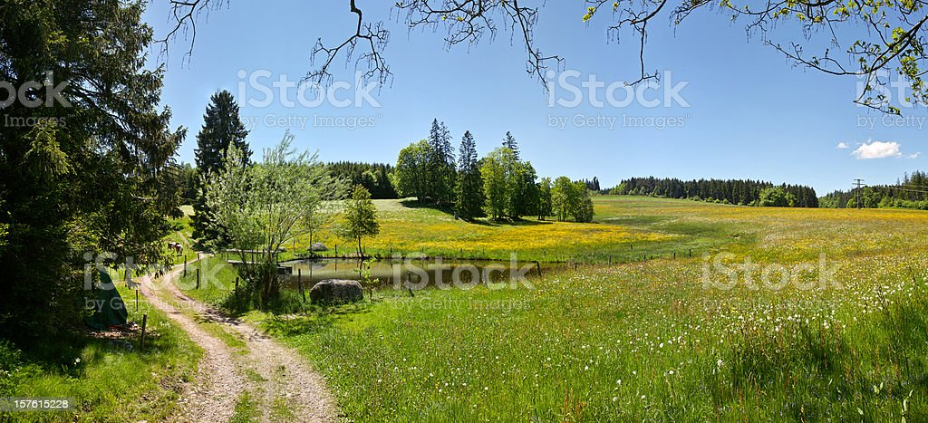 panorama of summerday in Black Forest with small lake royalty-free stock photo
