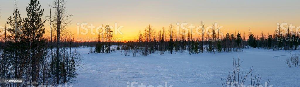 Panorama of sunset in Siberian taiga stock photo
