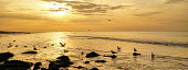 Panorama of sunset on the beach. Seascape at sunset. Silhouette of seagulls in backlight in the sea. Long-cover or banner.