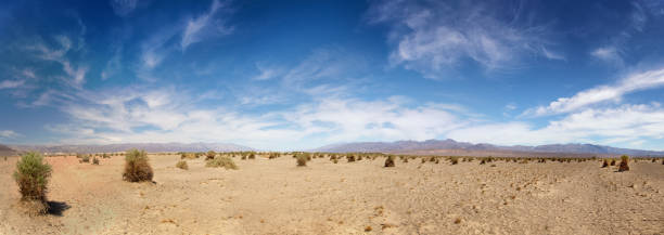Panorama of the Devil's Cornfield, showing the parched earth and generic vegetation, in Death Valley National Park, California, USA Panorama of the Devil's Cornfield, showing the parched earth and generic vegetation, in Death Valley National Park, California, USA mojave desert stock pictures, royalty-free photos & images