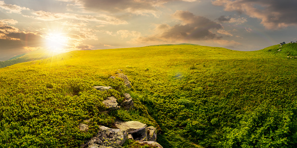 Panorama Of The Hillside Meadow At Sunset Stock Photo - Download Image Now