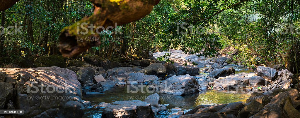 Panorama of the mountain river in the jungle, India, Goa foto stock royalty-free