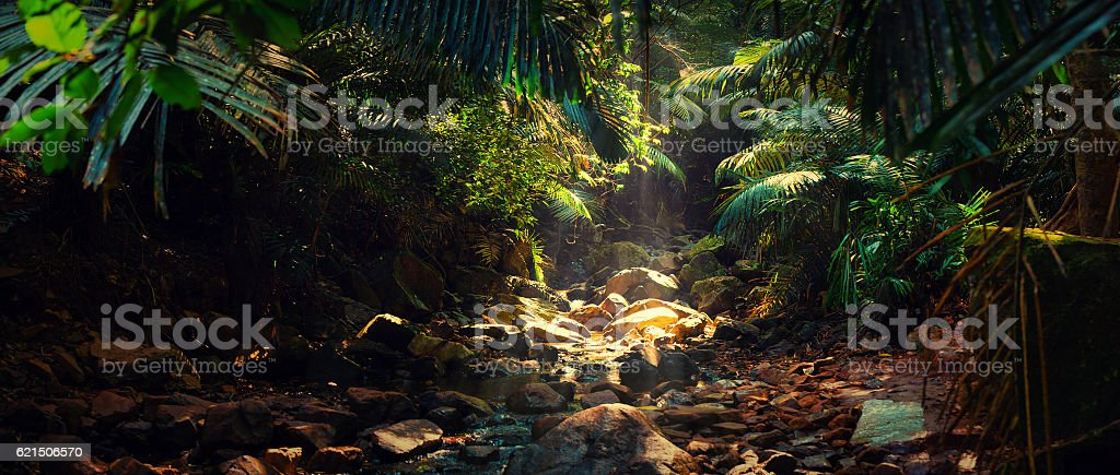 Panorama of the mountain river in the jungle, India, Goa stock photo