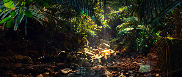 Panorama of the mountain river in the jungle, India, Goa - foto de acervo