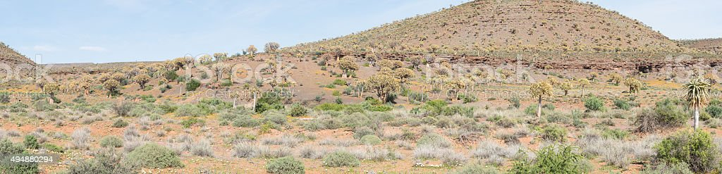 Panorama of the Quiver Tree Forest at Gannabos stock photo