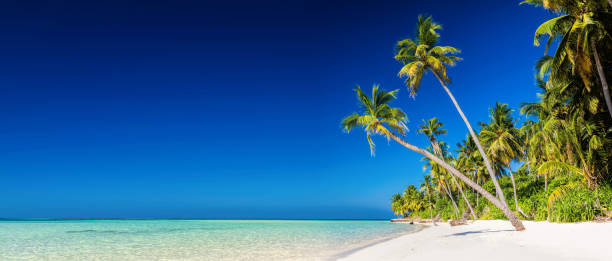 2f119b4d594 Panorama of tropical island with coconut palm trees on sandy beach. Maldives  stock photo