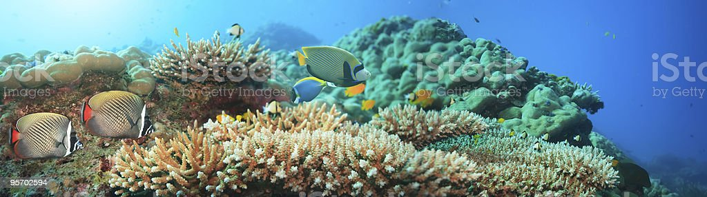 Panorama of underwater tropical coral reef and fish royalty-free stock photo