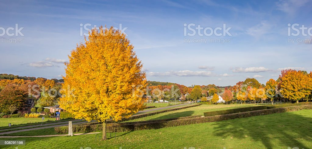 Panorama of vibrant yellow colored tree in Groesbeek stock photo
