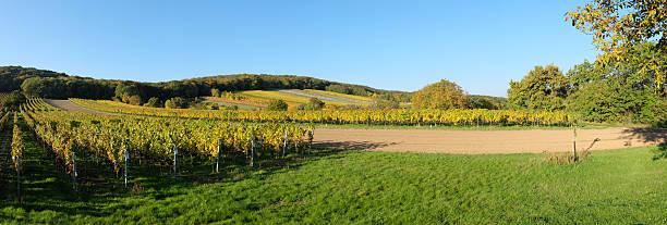 panorama der weinberge - burgenland stock-fotos und bilder