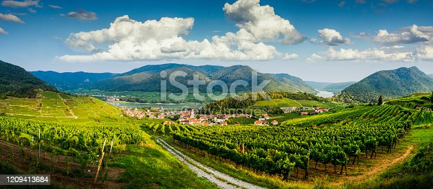 Panorama of vineyards in Wachau valley. Lower Austria.