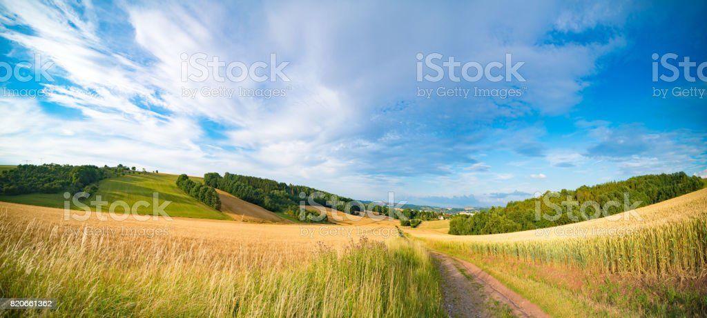 Panorama of wheat field in the morning in Kansas stock photo