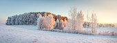 Panorama of winter nature landscape. Panoramic view on frosty trees on snowy meadow in morning with warm yellow sunlight. Christmas background. Xmas time. Wonderful winter.