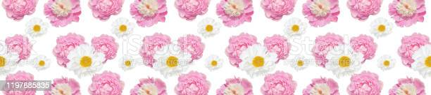 Panorama pink peonies spring pattern on white picture id1197685835?b=1&k=6&m=1197685835&s=612x612&h=m1pvabqqvavwlgnho7vukrmioza 2sseiw4ig6dd7ie=