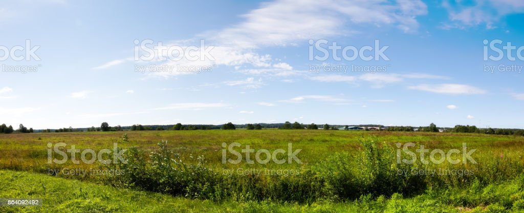 Panorama - Russian field in Sunny summer day royalty-free stock photo