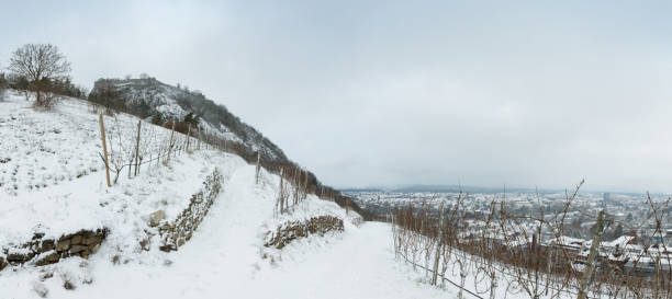 Panorama Singen Hohentwiel snow covered vineyar germany Panorama stitched with 3 images. singen stock pictures, royalty-free photos & images
