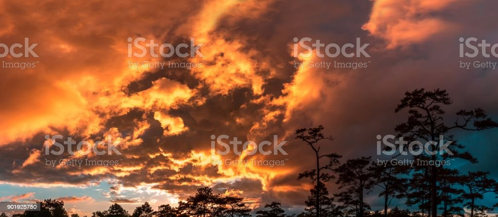 Panorama sky twilight and cloudy colorful tree sihouette stock photo