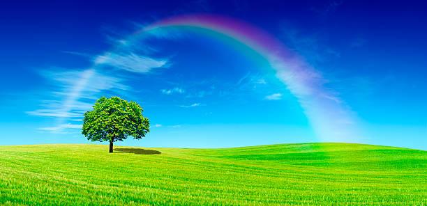 Panorama-einsamen Baum auf grünem Feld – Foto