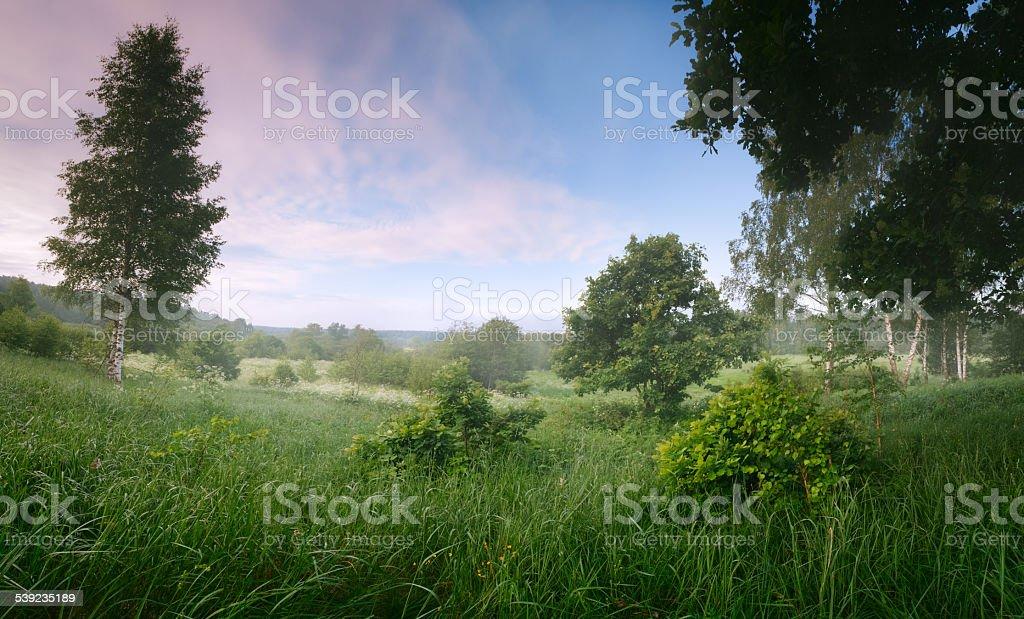 Panorama summer landscape royalty-free stock photo
