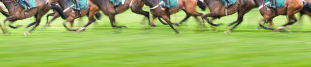 Panorama View of Race Horses stock photo