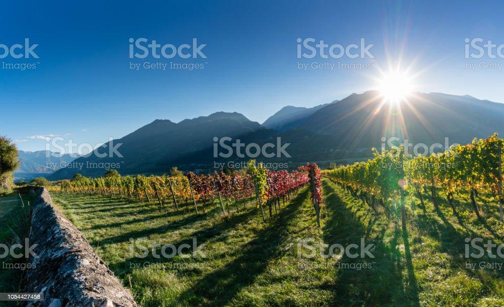 Panorama-Weingarten und Berg-Landschaft in den Schweizer Alpen im Herbst mit Sonne – Foto