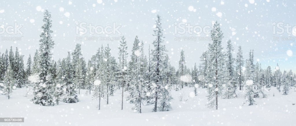 Panorama with a snow and arctic fir trees. stock photo