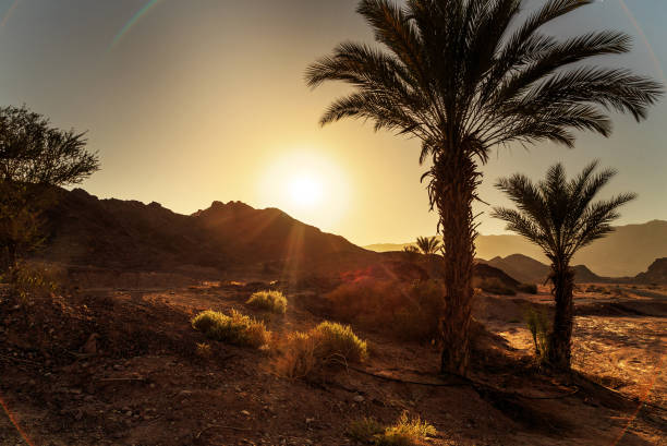Panorama with palms in Timna Park Panorama with palms in Timna Park, Israel negev stock pictures, royalty-free photos & images