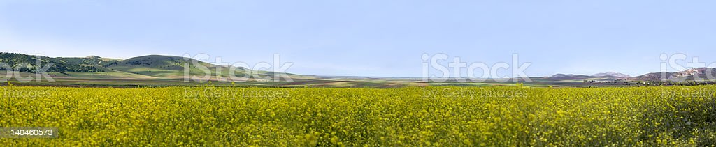panorama with rape flowers fields in spring and mountains royalty-free stock photo