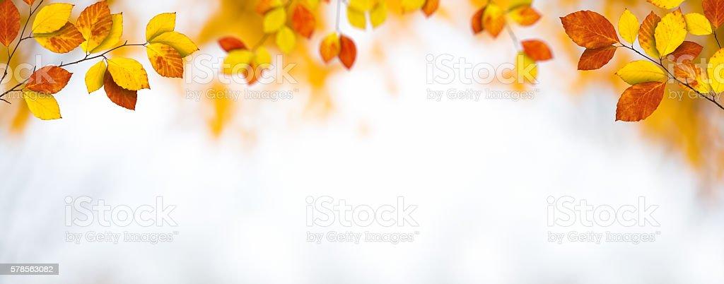 Panoramic Autumn Foliage stock photo