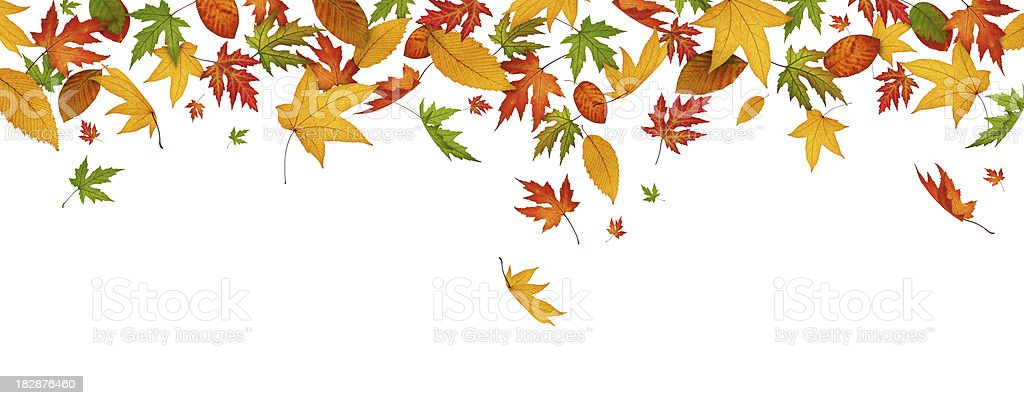 Panoramic Autumn Leaves royalty-free stock photo