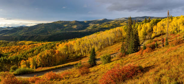 A panoramic autumn sunset view of golden aspen grove in a mountain valley, Routt National Forest, Steamboat Springs, Colorado, USA. Sunset Autumn Mountain Valley steamboat springs stock pictures, royalty-free photos & images