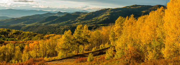 A panoramic autumn sunset view of golden aspen grove in a mountain valley, Routt National Forest, Steamboat Springs, Colorado, USA. Sunset Golden Valley steamboat springs stock pictures, royalty-free photos & images