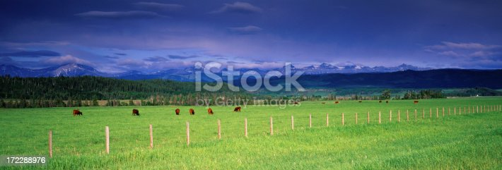 istock Panoramic Cattle Ranch 172288976