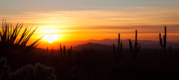 Panoramic Desert Sunset Silhouettes of cacti and mountains during sunset in Arizona USA. tucson stock pictures, royalty-free photos & images