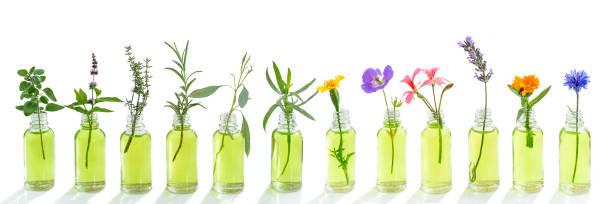 panoramic essential oil flowers cornflower, eucalyptus, tarragon, geranium, geranium, lavender, mint, carnation turkey, oregano, rosemary, marigolds, thyme on white stock photo