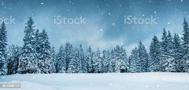 Panoramic fairy winter forest picture id824396120?b=1&k=6&m=824396120&s=612x612&h= h32wjbyygsqqxhtpayuxjfvk7mpa0hewgcyrixdrbg=