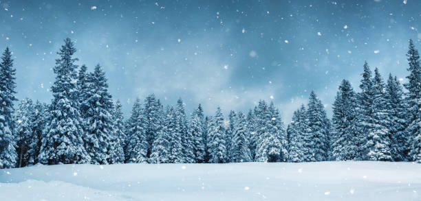 Panoramic Fairy Winter Forest stock photo