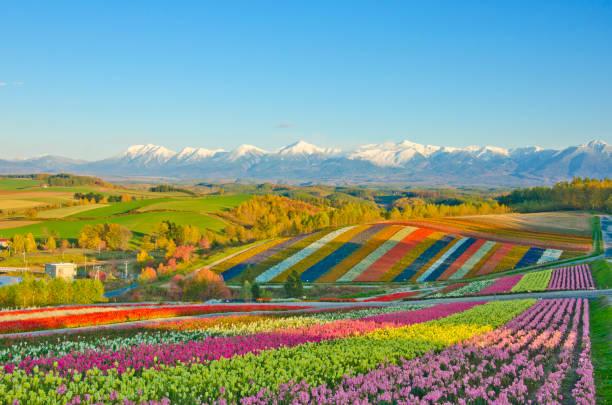 美瑛のパノラマフラワーガーデン - 北海道 ストックフォトと画像