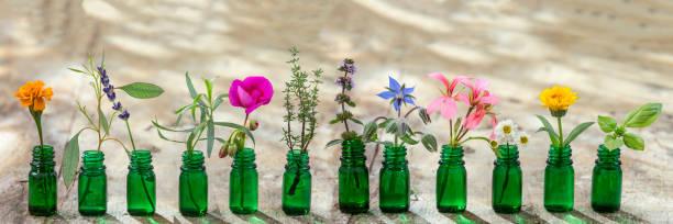 panoramic green essential oil bottle, and flowers cornflower, geranium, lavender, mint, oregano, rosemary, marigold, thyme, basil, bourache, chamomile, tarragon, eucaliptus, granium, lavender, mint, carnation turkey, marigolds, stock photo