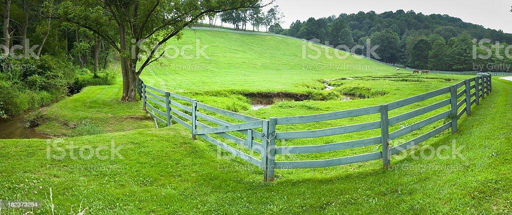 Panoramic Green Pasture stock photo
