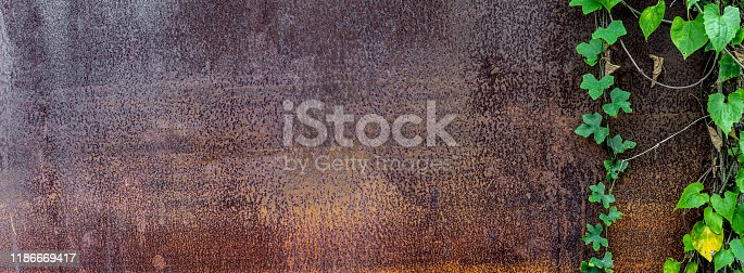 Panoramic grunge rusted metal texture with creeping plant. Overgrown plant on rust and oxidized metal background. Old metal iron panel with tree vine.