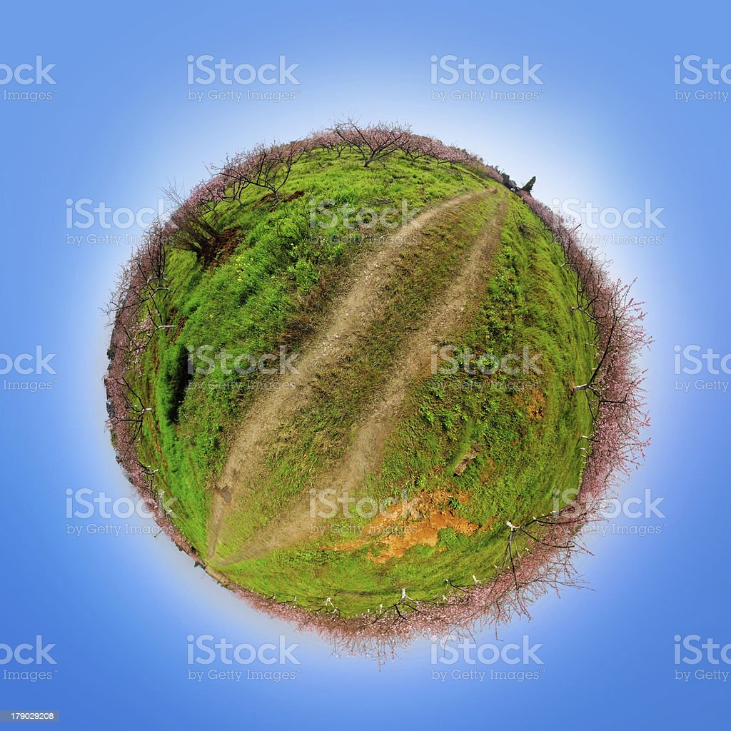 Panoramic image from peach garden of spring stock photo