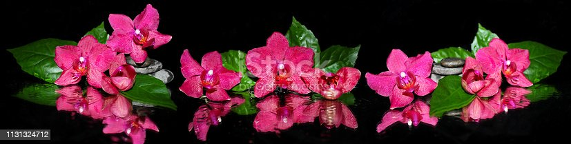 Panoramic image of purple orchids on a black background.