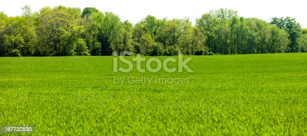 A springtime isolated panoramic treeline sits behind a field of grass