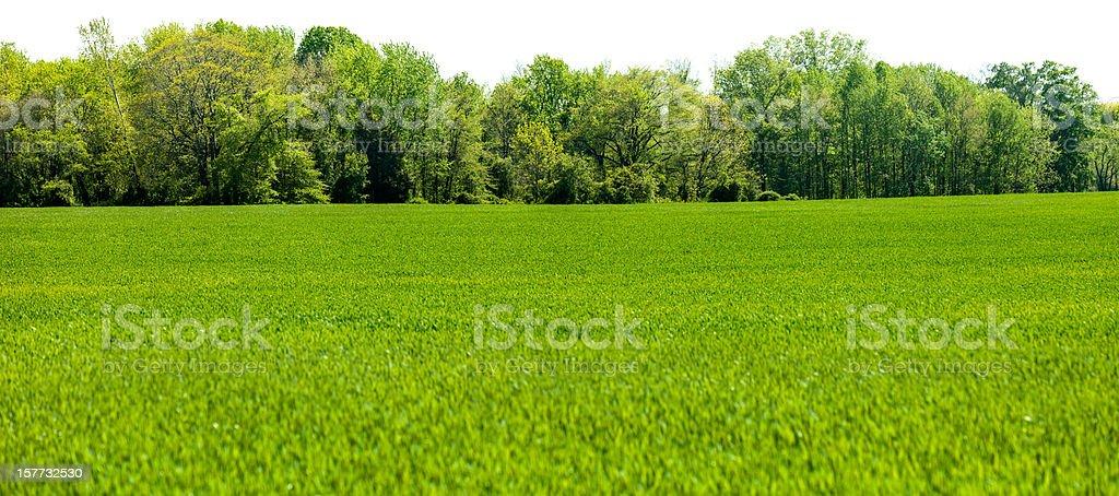 Panorama isoliert Frühling Baum und Gras Feld Linie den Vordergrund – Foto
