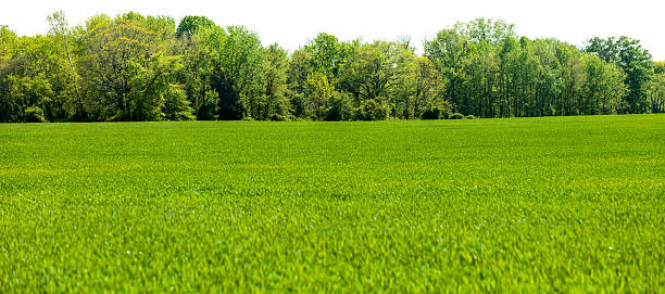 Panoramic Isolated Springtime Tree line with Grass Field Foreground stock photo