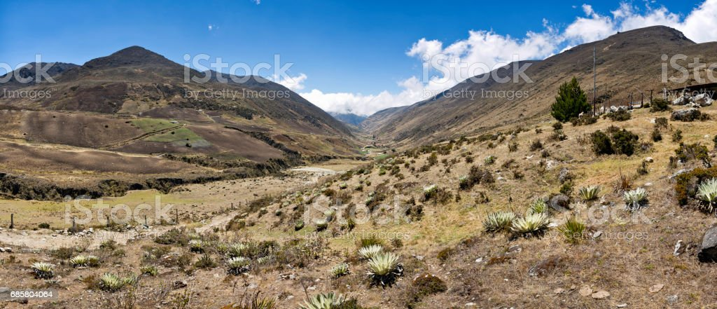 Panoramic landscape of Gavidia valley with Frailejons. Merida state, Venezuela stock photo