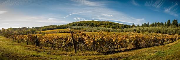 Panorama-Landschaft mit Weinberg und olive tree – Foto