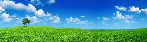 panorama meadow - breit stock-fotos und bilder