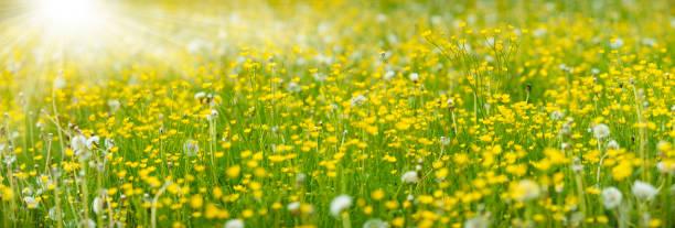 Panoramawiese mit Frühlingsblumen und Sonnenstrahlen – Foto
