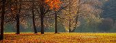 Beautiful Panoramic Nature Autumn landscape, selective focus. Scenery view on autumn city park with golden yellow foliage in Sunny day.